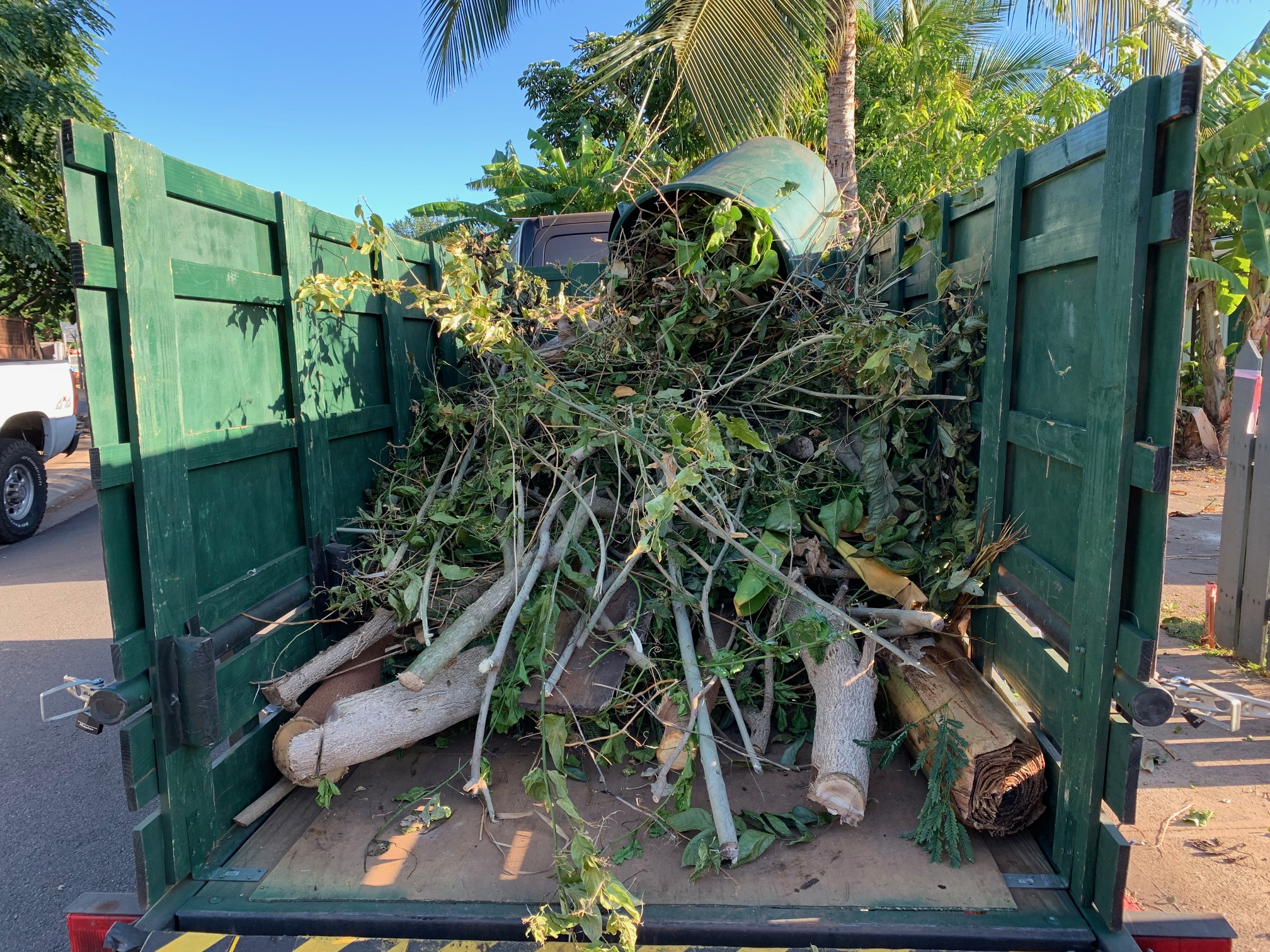 maui tree trimming coconut palm pruning